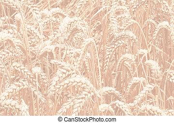 grain field 2