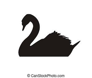 Schwarz, schwan