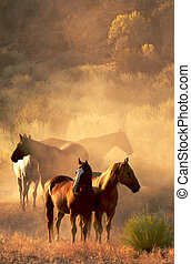 Peaceful Gathering - Four horses standing in the desert in...