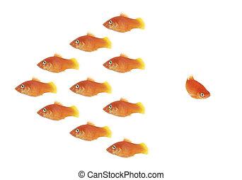 peixe, enxame