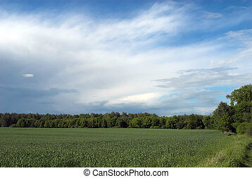 landscape - tree, field, landscape, isolated, hills, hill,...