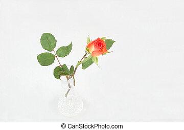 single rosebud in a vase - single rosebud in crystal vase