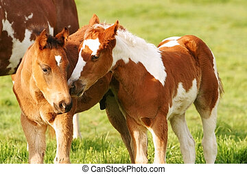 Little Horse Friends - two small painted foals being sweet