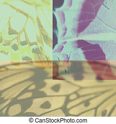 Collage - Wings collage