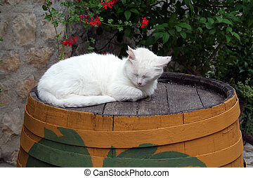 cat sleeping on the barrel in Ston Croatia