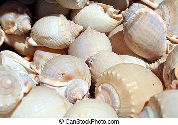 plenty of snail shells - snail shells in the market in...