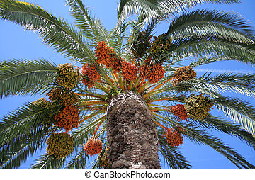 palm and the blue sky - plenty of leaves lonely palm in...
