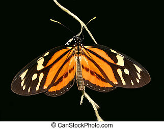 Butterfly - orange,black and white butterfly isolated on...