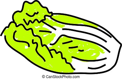 chinese cabbage isolated on white drawn in toddler art style