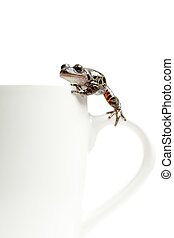frog on coffee cup - frog climbing around on a coffee cup,...