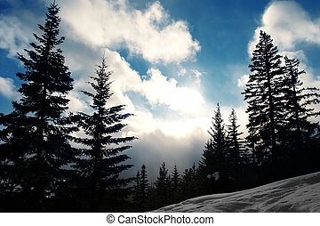 Winter Landscape - Pine Tree Silhouettes