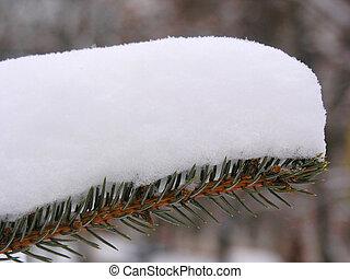 snowbank firtree