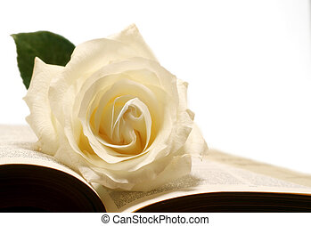 Rose And Bible - Creamy white rose on very old bible