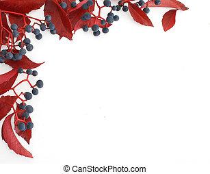 Woodbine frame - Woodbine (Parthenocissus quinquefolia)...