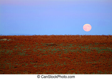 moon rising - brown grassland with blue sky and moon