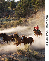 Horses on the Run - horses being chased with a lasso