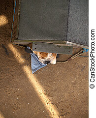 Kennel with guard dog