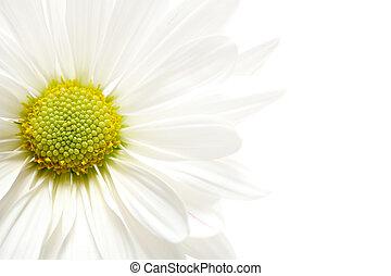 daisy highkey