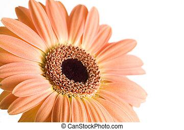 daisy isolated macro