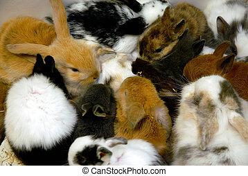 bunnies - littles bunnies in a store