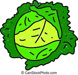 cabbage - savoy green leafy cabbage isolated on white drawn...
