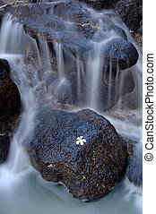Hawaiian flower and waterfall - graceful waterfall and white...