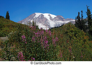 Mountain Rainier - volcano mountain rainier with less snow...