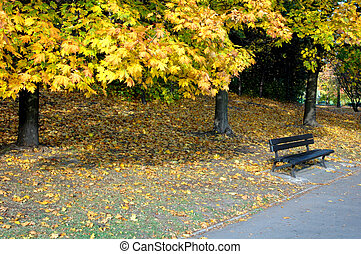 park in the autumn - park in the sunny autumn day,...