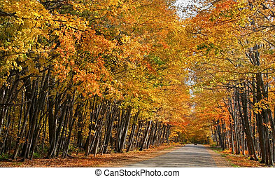 AUTUMN LANDSCAPE - Road through orange colored autumn trees...