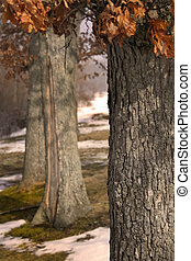 Close up of trees