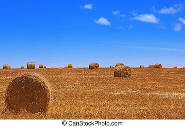 Haybales 1 - Rolls of gathered hay on the lands