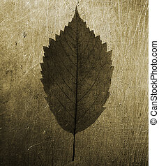 grunge metal background with leaf - old texture special...