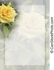Yellow Rose Bkground - Floral background featuring yellow...