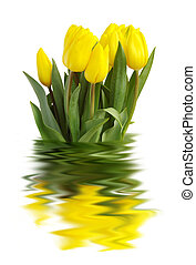 YELLOW TULIPS - A bouquet of yellow tulips against a white...