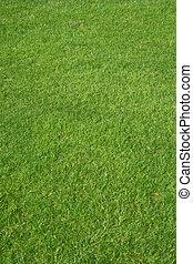 Golf grass - New fresh perfect natural green golf grass