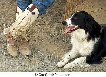 Cowboy Boots and dog - A pair of worn cowboy boots and the...