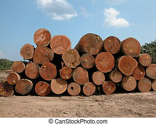 Tropical timber - Freshly cut Selangan Batu logs in Tawau,...