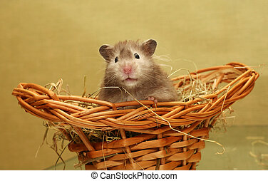 Hamster - Grey hamster in a wum basket