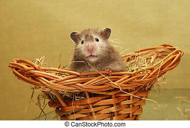 Hamster - Grey hamster in a wum basket