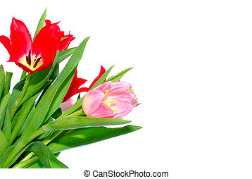 Colorful Easter flower background, tulips - Colorful easter...