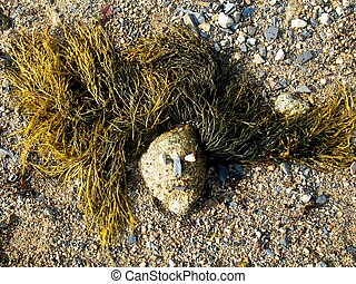 Sea Witch - Rock decorated with seaweed and pebbles to...