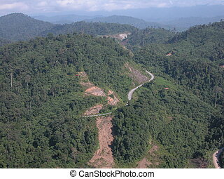 Rainforests - Large areas of the tropical rainforests in...