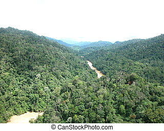 Tropical rainforests - Aerial view of tropical rainforests...