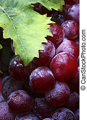 Wine Grapes - Bunch of red wine grapes wuth green vine leaf...