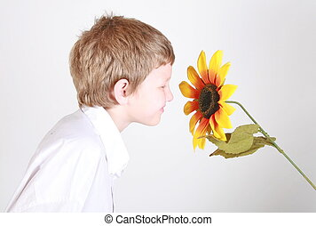 smelling sunflower