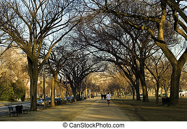 National Mall - Man jogging in National Mall alley,...