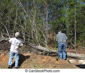 Timmmmber! - Men felling a tree.