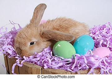 another easter photo - Another adorable easter bunny with...