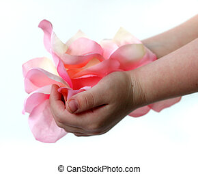 Hand Full of Petals - young childs hands holding a bunch of...