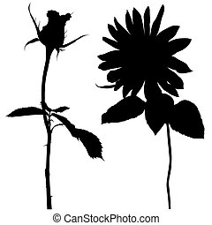 Floral silhouette 02 - High detailed black white...